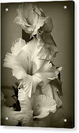 Antiqued Gladiolus Acrylic Print