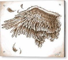 Antiqued Wing Acrylic Print by Adam Zebediah Joseph