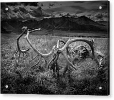 Antlers In Black And White Acrylic Print by Andrew Matwijec