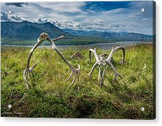 Antlers On The Hill Acrylic Print by Andrew Matwijec