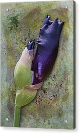 Any Day Now Acrylic Print by Susan Candelario