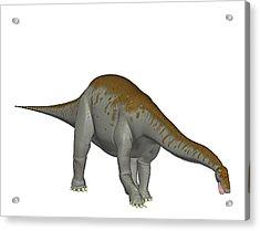 Apatosaurus Dinosaur Acrylic Print by Friedrich Saurer