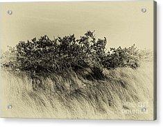 Apollo Beach Grass Acrylic Print by Marvin Spates