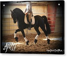 Apollo Friesian Stallion Acrylic Print