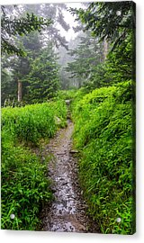 Appalachian Trail At Clingmans Dome Acrylic Print