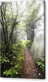 Appalachian Trail Acrylic Print by Debra and Dave Vanderlaan