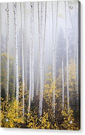 Apparitions I Acrylic Print