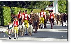 Appenzell Parade Of Cows Acrylic Print