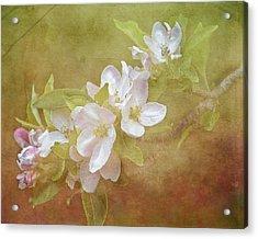 Apple Blossom Spring Acrylic Print