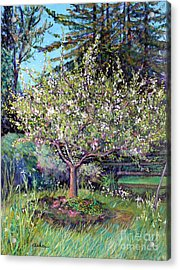 Apple Blossoms And Spring Flowers Acrylic Print by Asha Carolyn Young