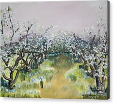 Apple Blossoms In Ellijay -apple Trees - Blooming Acrylic Print