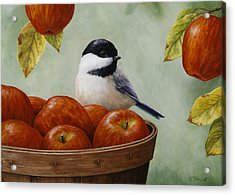 Apple Chickadee Greeting Card 1 Acrylic Print by Crista Forest