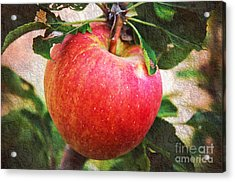 Apple On The Tree Acrylic Print by Andee Design