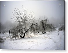 Apple Orchard Acrylic Print by Hugh Smith