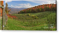 Apple Orchard Panorama Acrylic Print by Charles Kozierok