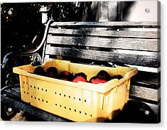 Acrylic Print featuring the photograph Apple Picking by Meaghan Troup