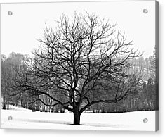 Apple Tree In Winter Acrylic Print by Elena Elisseeva