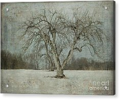 Acrylic Print featuring the photograph Apple Tree In Winter by Vicki DeVico