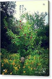 Apples And Hornets Acrylic Print by Garren Zanker