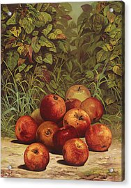 Apples Circa 1868 Acrylic Print by Aged Pixel