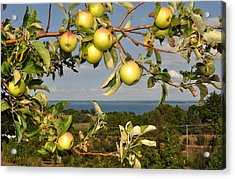 Apples Over Grand Traverse Bay Acrylic Print