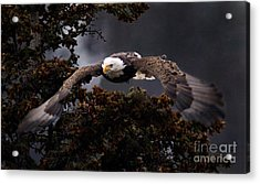Approaching Eagle-signed- Acrylic Print