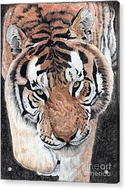 Approaching Tiger Acrylic Print by Audrey Van Tassell