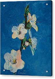 Apricot Blossom Acrylic Print by Michael Creese