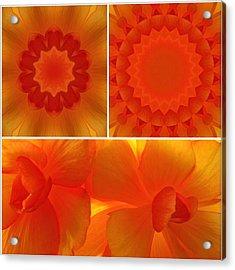 Apricot Acrylic Print