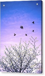 April Dawn Acrylic Print