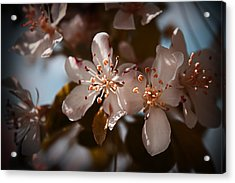 April In Colors Acrylic Print