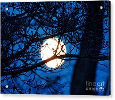 April Morning Moon Acrylic Print by Judy Via-Wolff