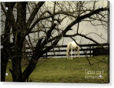 April Showers Acrylic Print by Cris Hayes