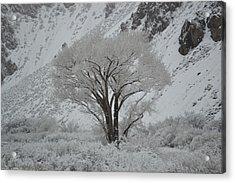 April Snow In Utah - Tree Acrylic Print