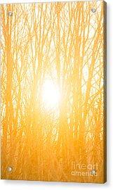 April Sunrise Acrylic Print by Diane Diederich