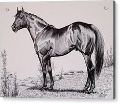 Aqha Stallion Driftwood Acrylic Print