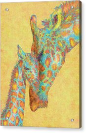 Aqua And Orange Giraffes Acrylic Print