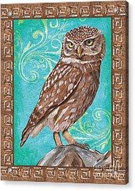 Aqua Barn Owl Acrylic Print by Debbie DeWitt