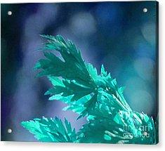 Aqua Dreams  Acrylic Print by First Star Art