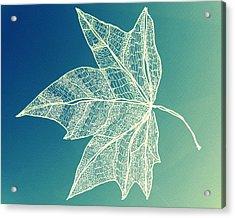 Aqua Leaf Study 1 Acrylic Print