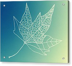 Aqua Leaf Study 2 Acrylic Print by Cathy Jacobs