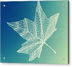 Aqua Leaf Study 4 Acrylic Print by Cathy Jacobs