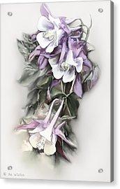 Aqualigia Cascade Acrylic Print by Bonnie Willis