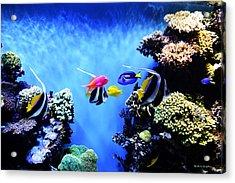 Aquarium 1 Acrylic Print by Barbara Snyder