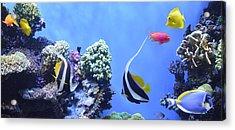 Aquarium 5 Acrylic Print by Barbara Snyder