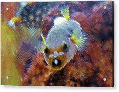 Aquarium Art 16 Acrylic Print by Steve Ohlsen