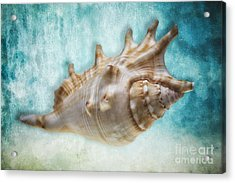Aquatic Dreams I Acrylic Print by George Oze