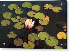 Aquatic Garden With Water Lily Acrylic Print