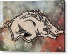 Ar Razorbacks Go Hogs Acrylic Print by Dawn Bearden