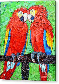 Ara Love A Moment Of Tenderness Between Two Scarlet Macaw Parrots Acrylic Print